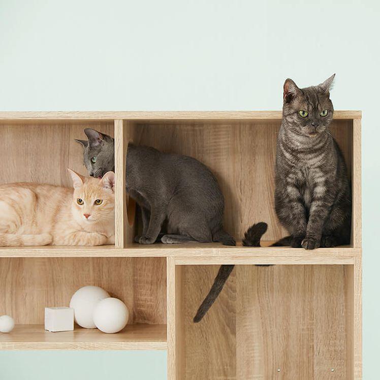 猫と一緒に暮らすための家具を